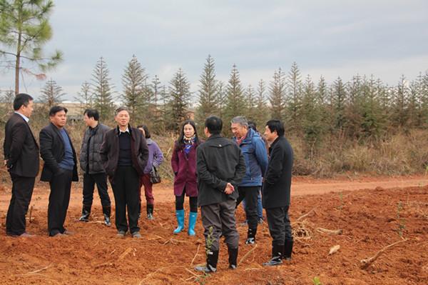 江西省林业厅厅长阎钢军(左四)到上高县调研春季造林