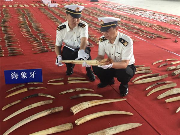 哈尔滨海关查获特大濒危动物制品走私案