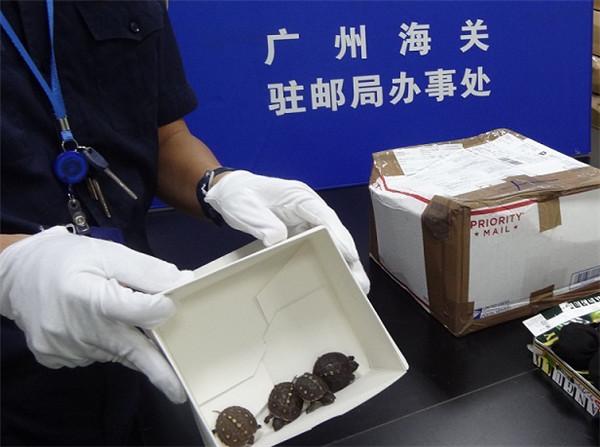 广州海关从进境邮包中截获活体动物